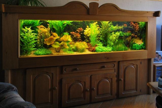 Можно взять аквариум и немного
