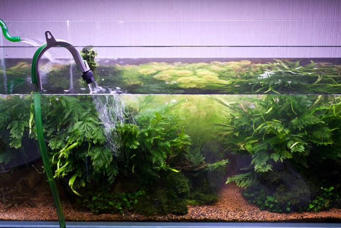 Можно ли сажать аквариумные растения в холодную воду