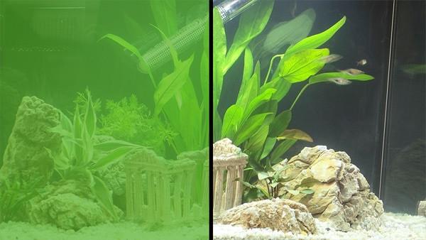 мутная вода в аквариуме причины и способы устранения проблемы