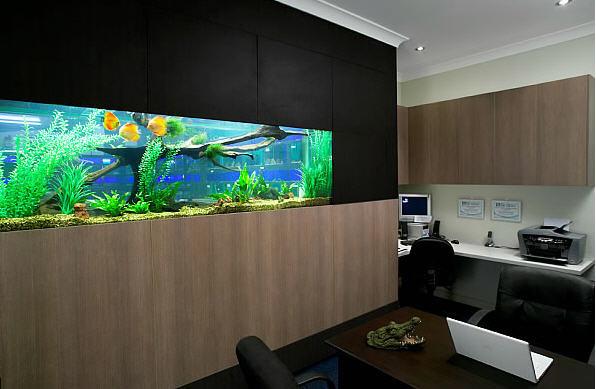 Встроенный аквариум в офисе